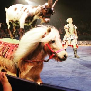 There is nothing natural about a goat riding a horse :(